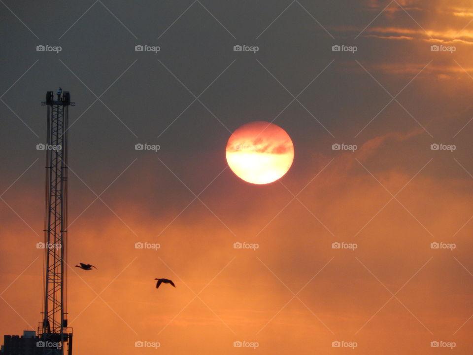 Ducks at industrial sunset