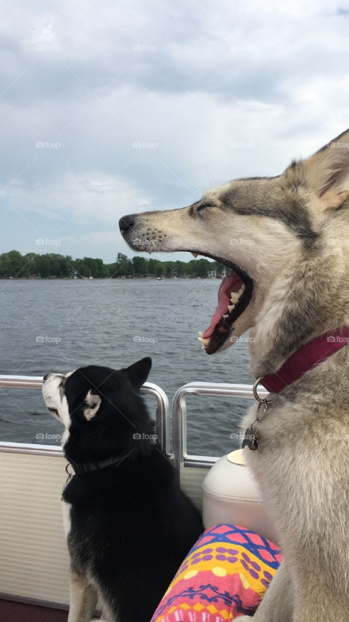 Big yawn !