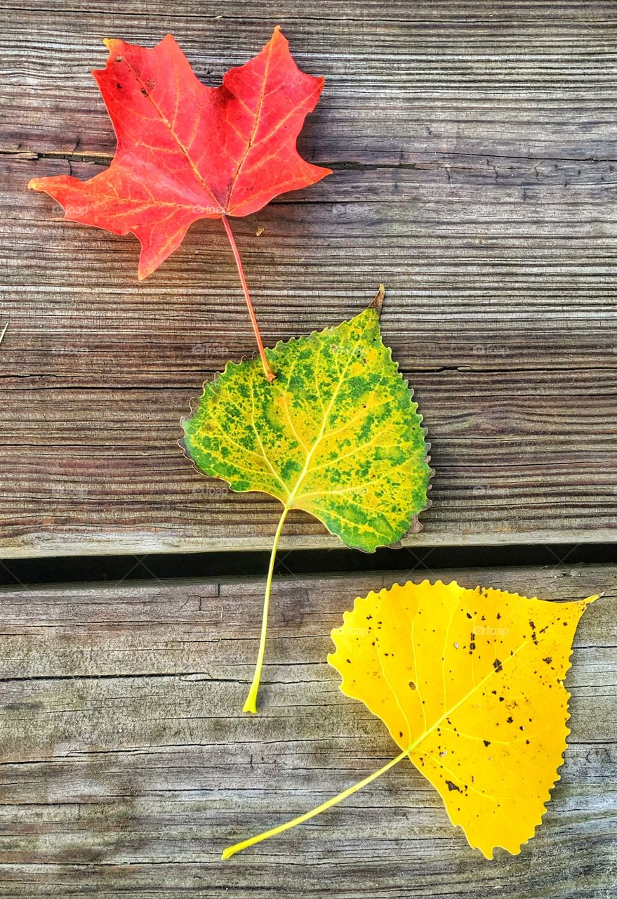 Variety of autumn leaves on wooden