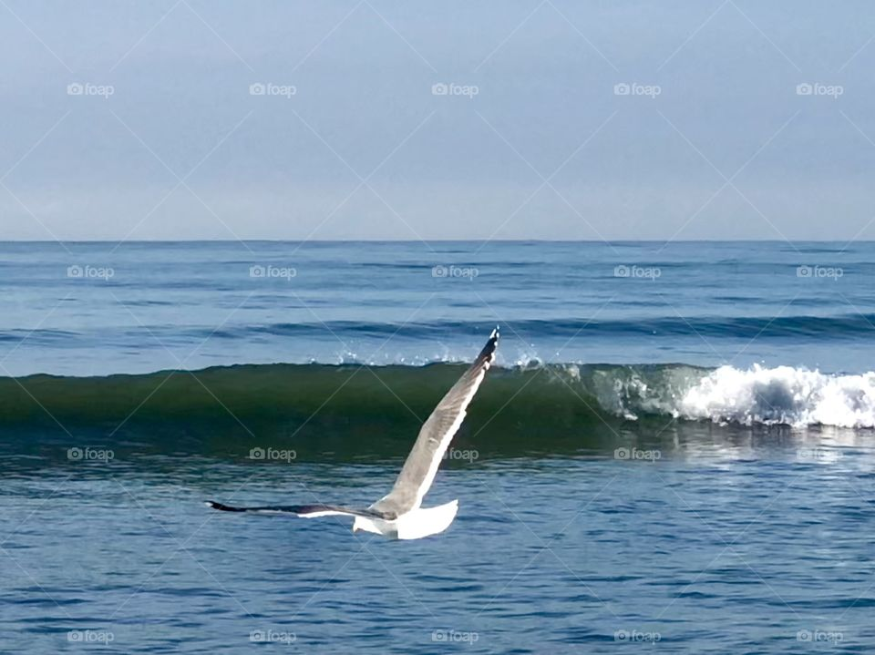 Stunning Seagull In Flight Over Crashing Waves