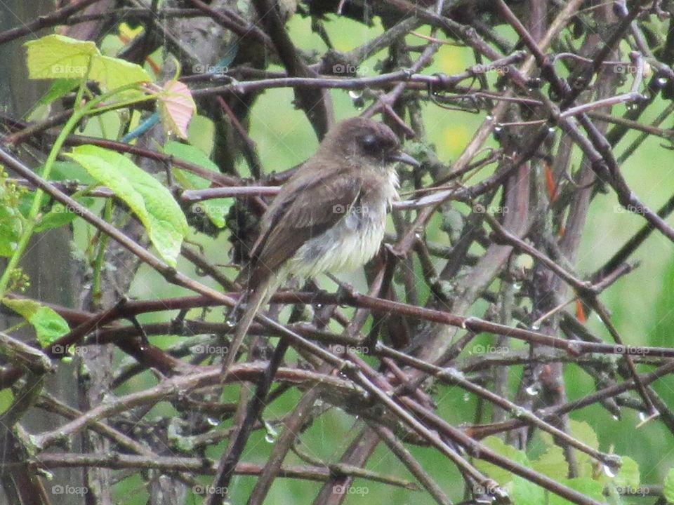 Bird, Wildlife, No Person, Outdoors, Nature