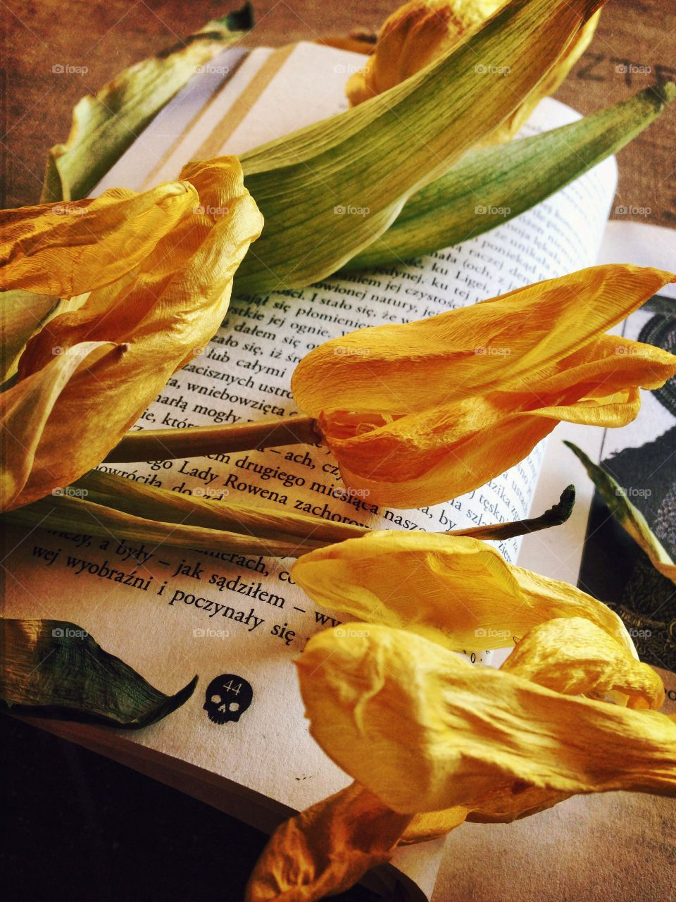 Tulips . Flowers on the book