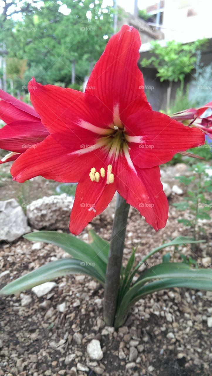 red flower . beautifull red flower