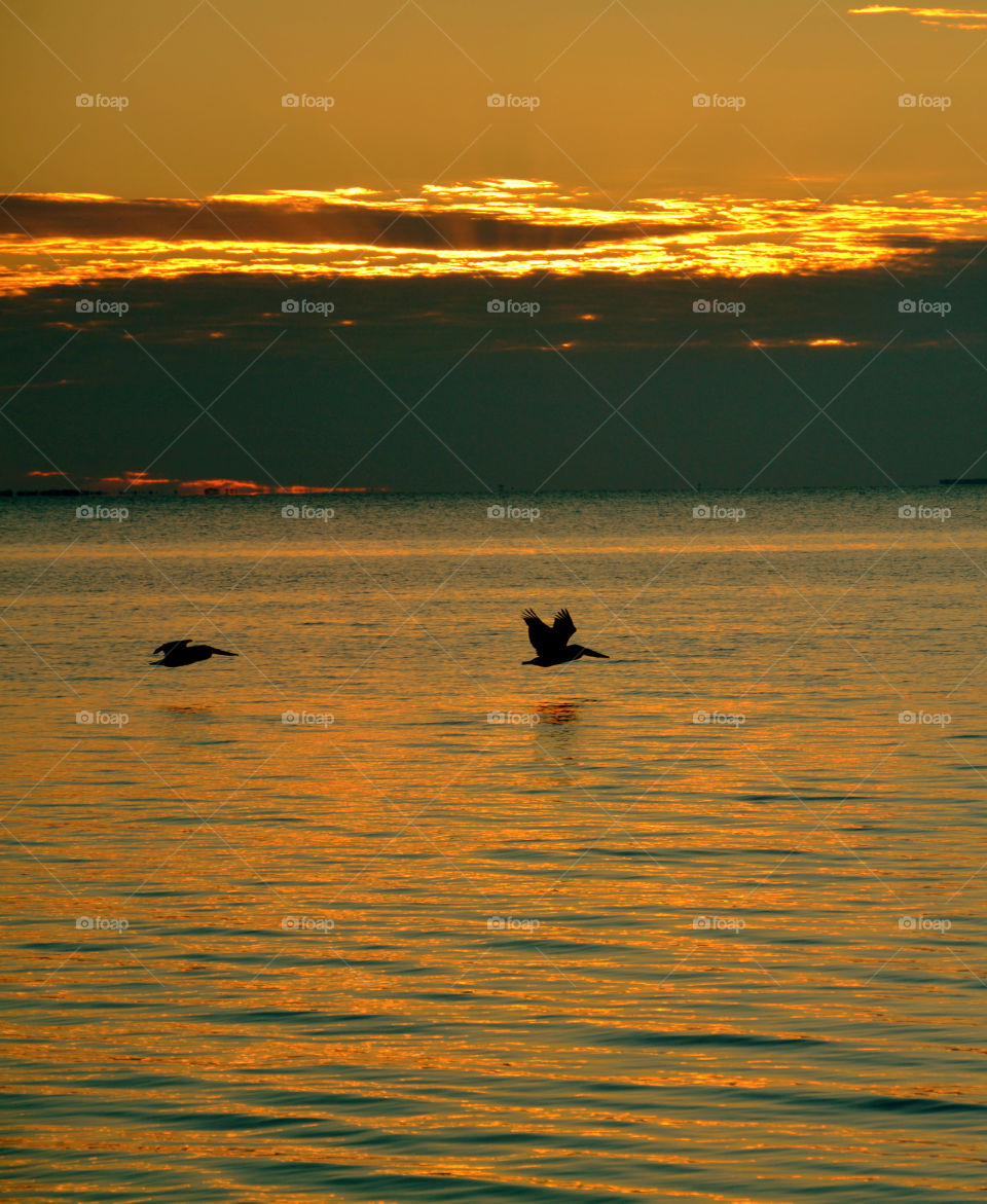 Silhouette of birds flying over the sea