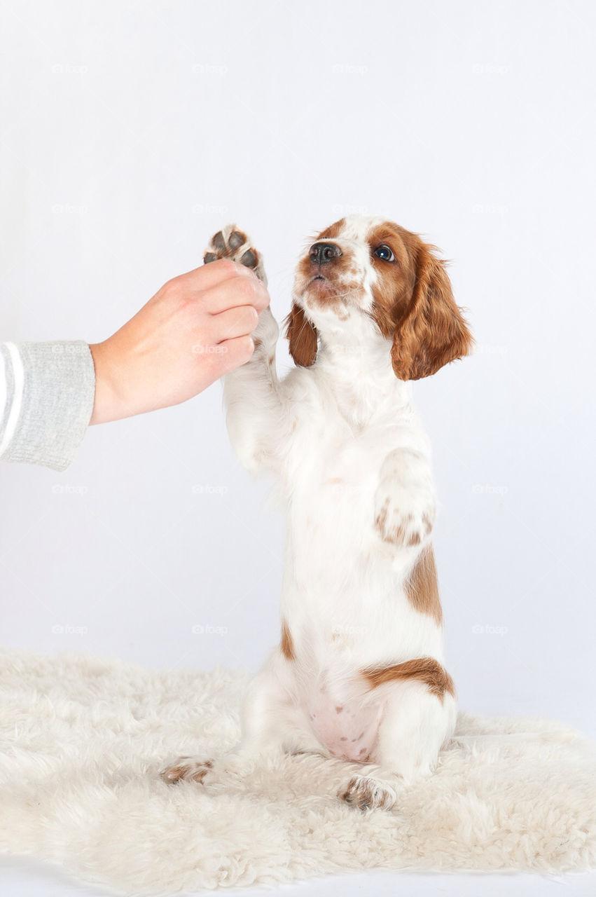 food dog sweet puppy by marinasiljehav
