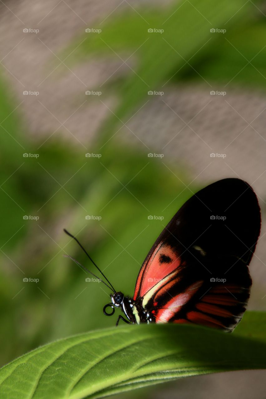 A macro close-up of a brightly coloured tropical butterfly