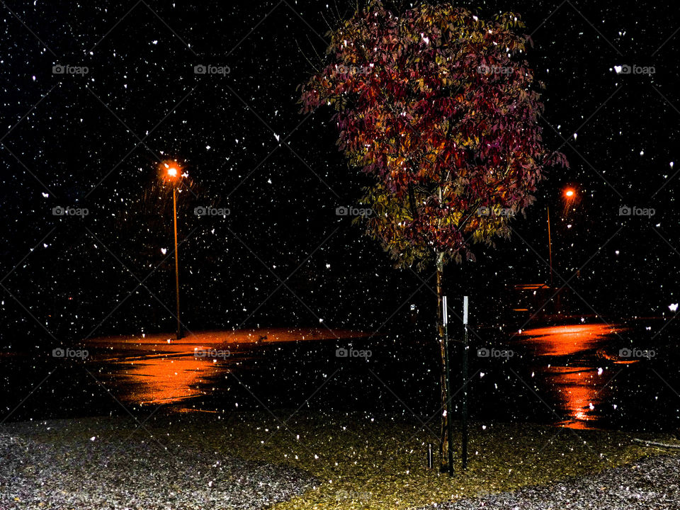 Snow storm during the night while the trees still looked like autumn