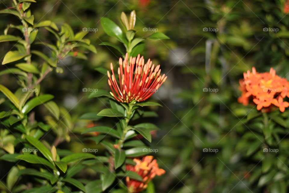 leaf and shoots flower