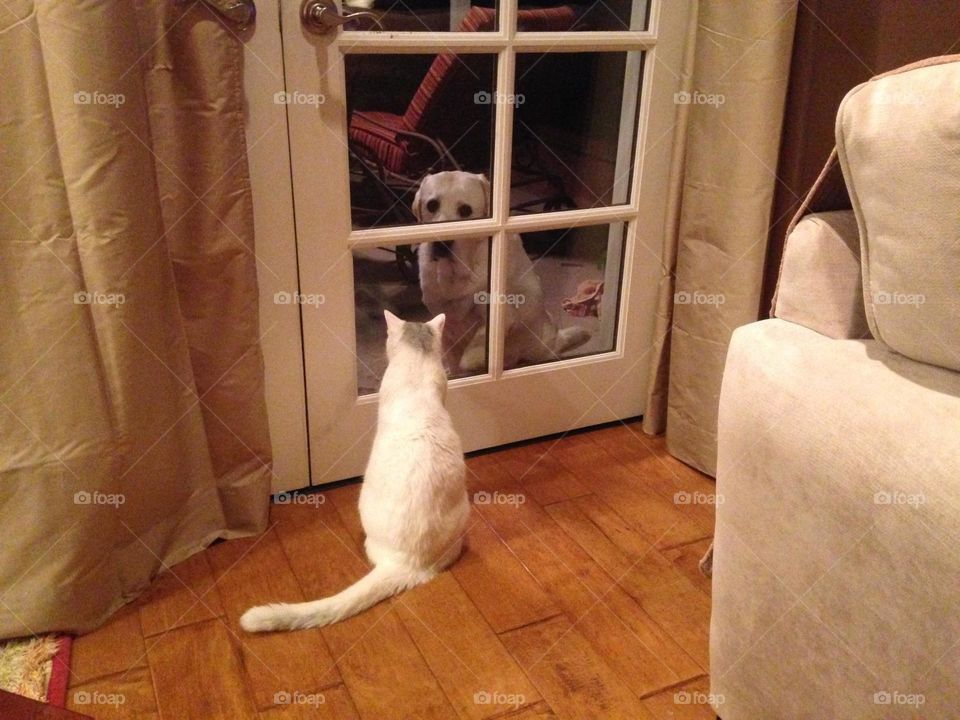 You can't always get what you want. . These furry little friends mean so much to us and because of that often get their way, but this time the dog wants in and the cat wants out.