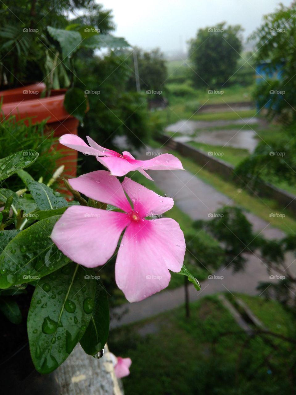 First Rain drops.