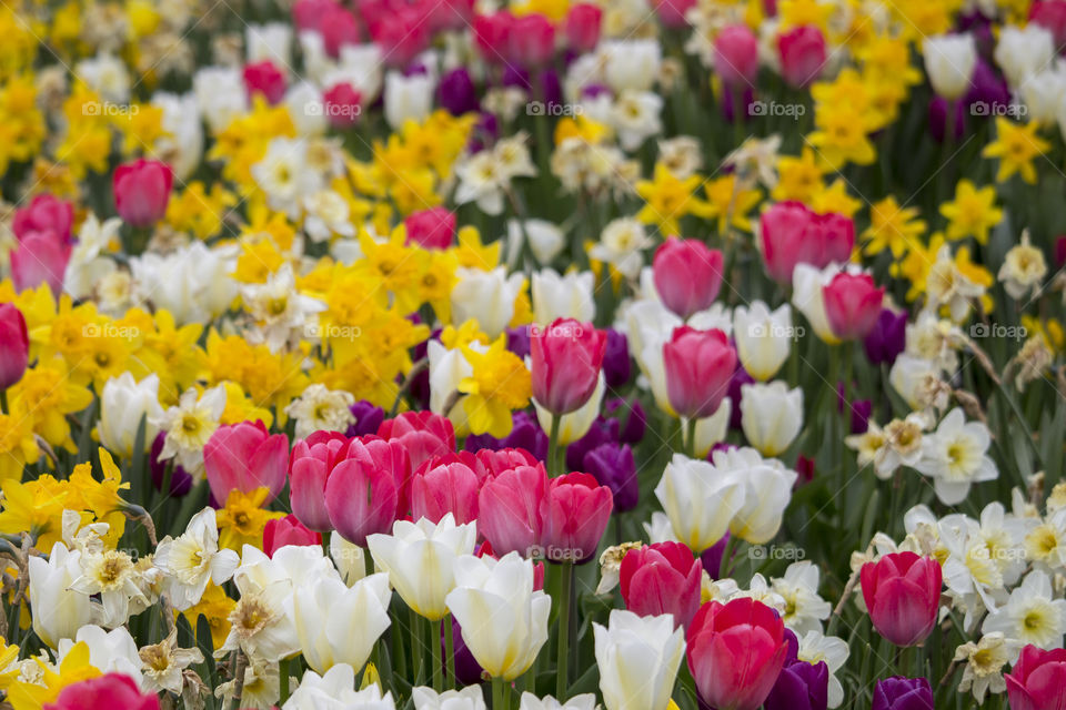 Flowers blooming in the garden