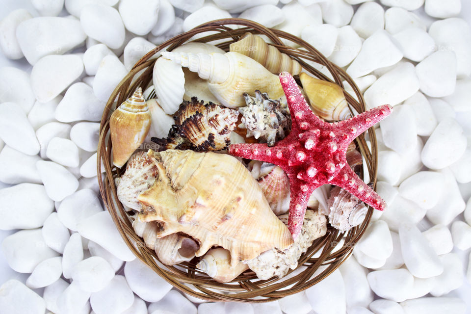 Seashells and starfish in a basket on a background of white stones