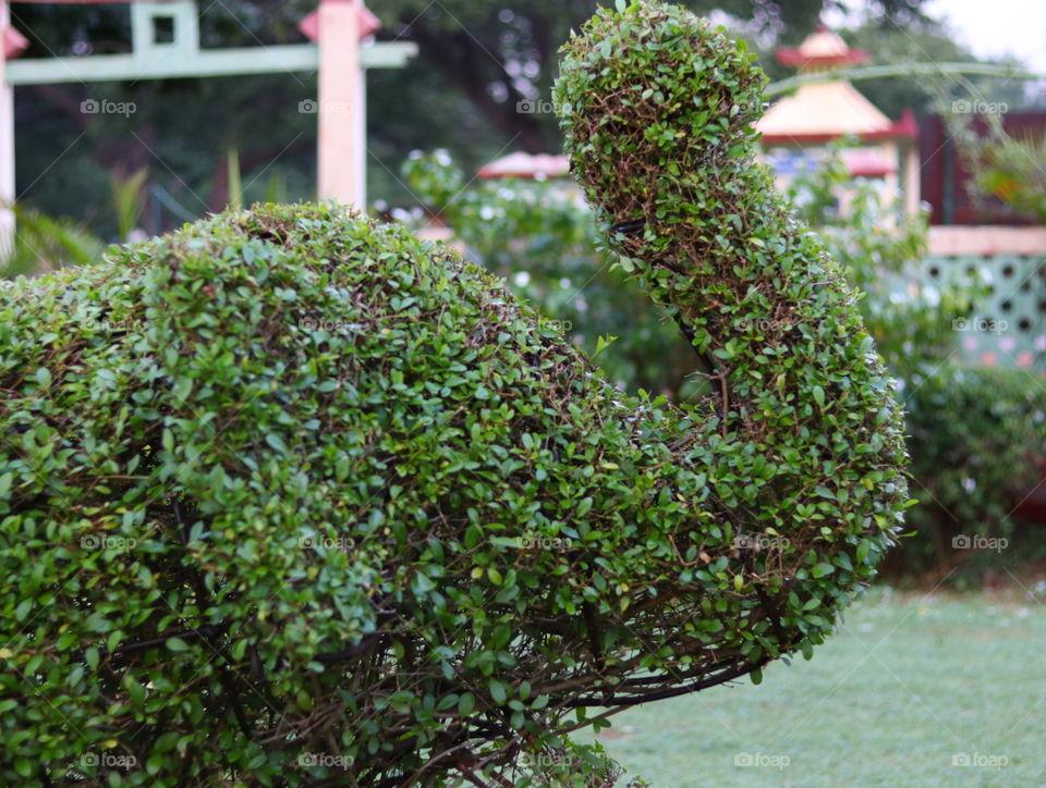 duck plant