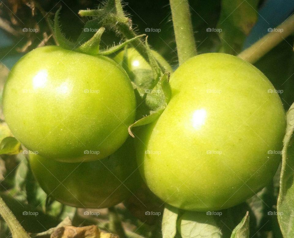 amazing beautiful tomatoes