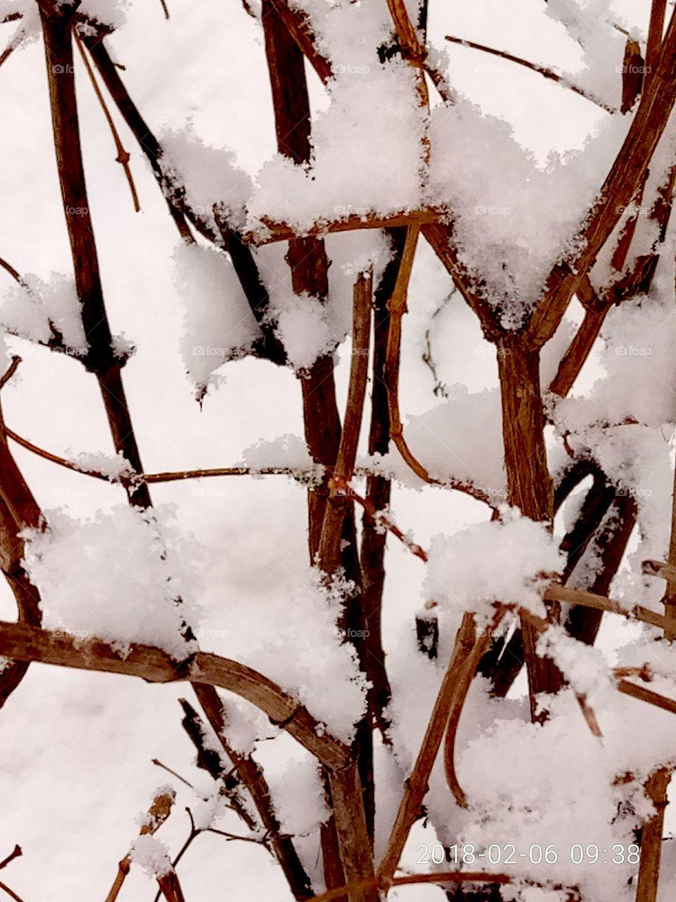 No Person, Frost, Snow, Winter, Cold