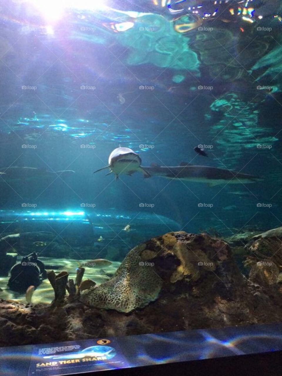 Sharks and fish at Ripley's Aquarium