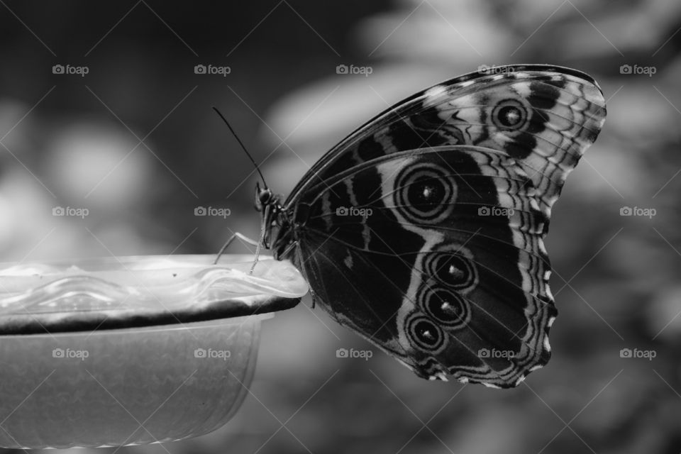 Monochrome Butterfly, Butterfly Photography, Insect, Wildlife In Black And White