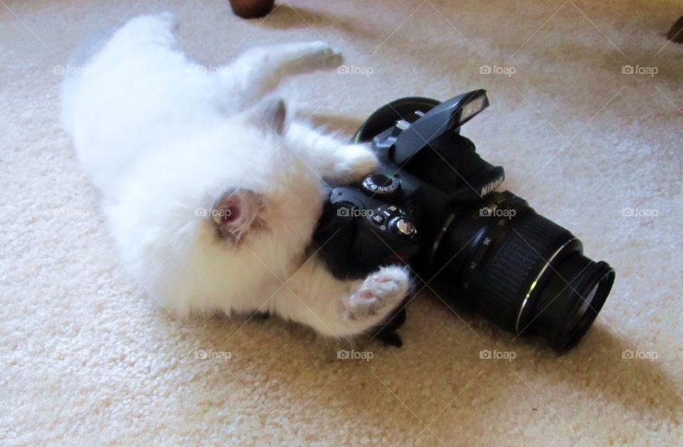 Cat with camera | ellijay, shutterbug, photo, kitten