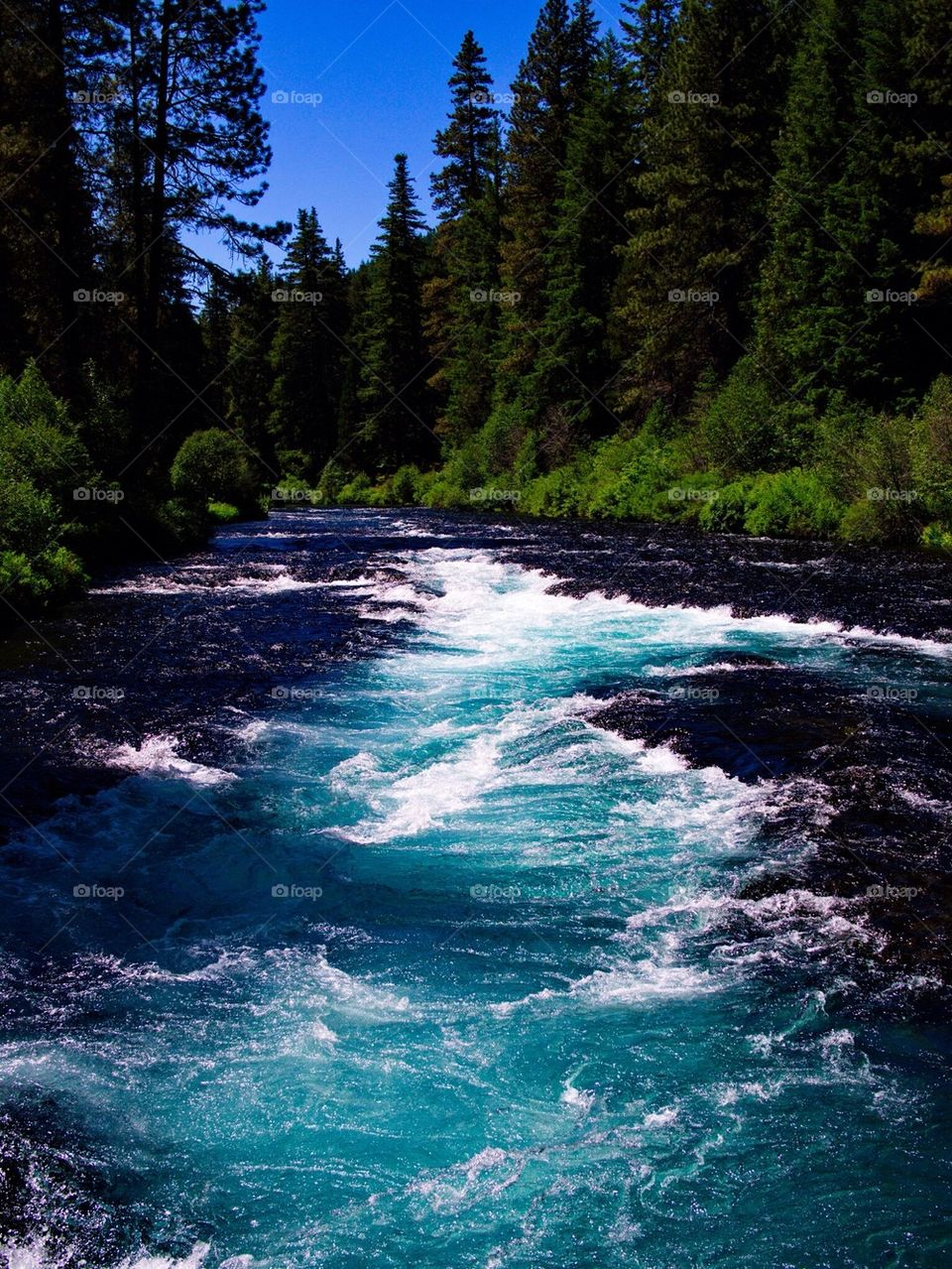 Rapids at the deep blue and turquoise waters of the Metolius River at Wizard Falls in Central Oregon on a sunny summer day.