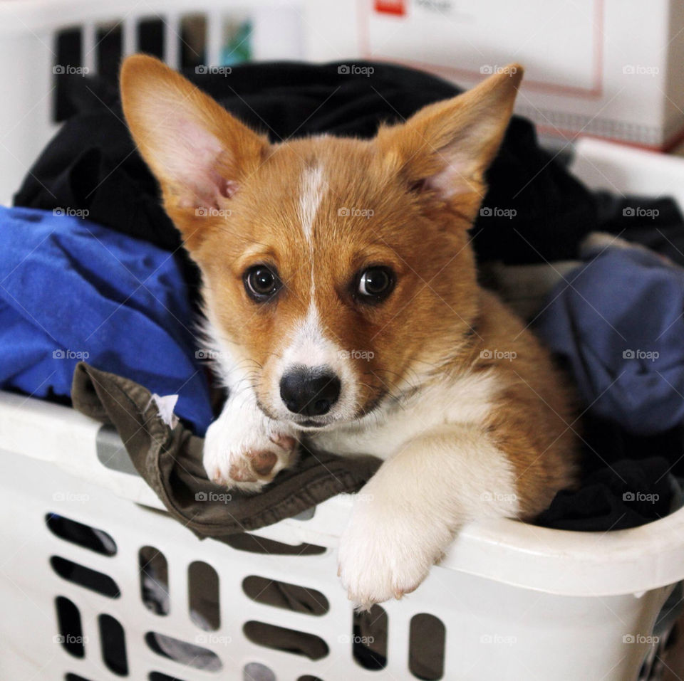 Puppy Laundry Time!