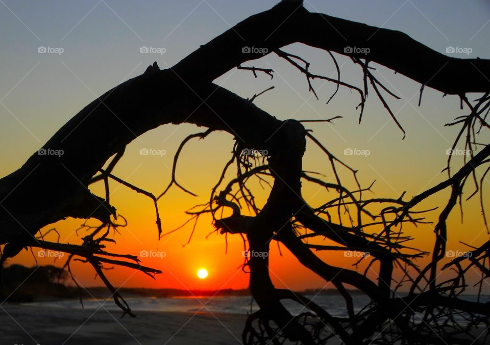 A sunset behind the branches. A sunset taken on a Brazilian beach