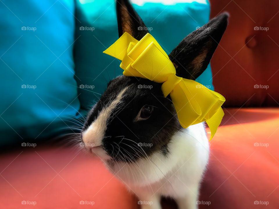 Cute bunny, big bow
