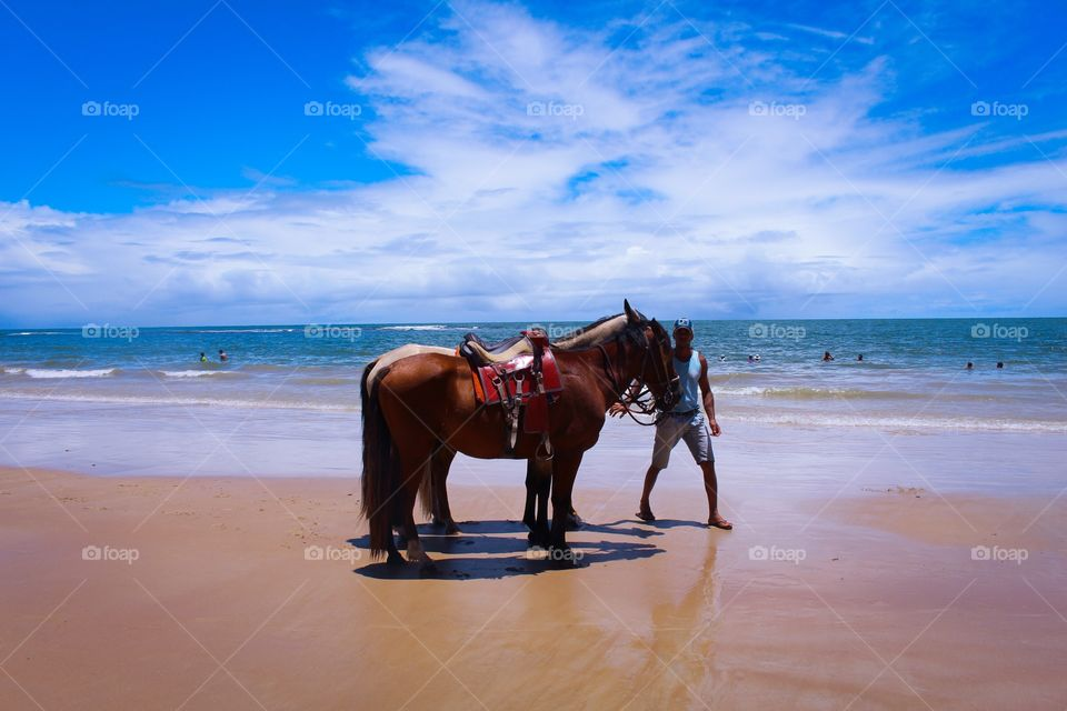 A man and his two horses on the paradise beach in Brazil