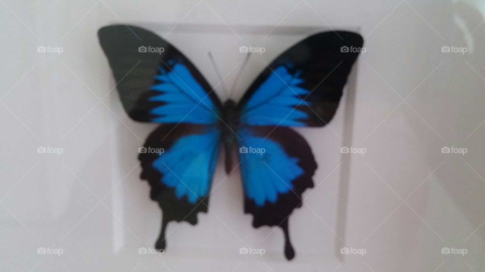 butterfly. beautiful colors