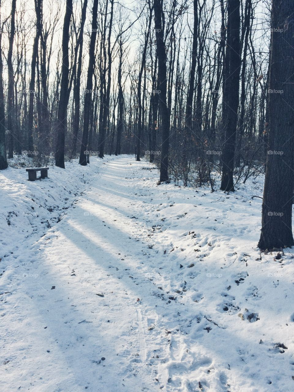 Oh, those snowy days! It's always nice to take a walk through the woods and  the snow all around you makes the walk even more special and magical.