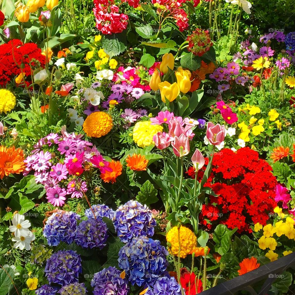 Mixed flowers in different colors