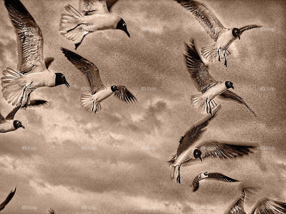 Flock of birds in sepia tone