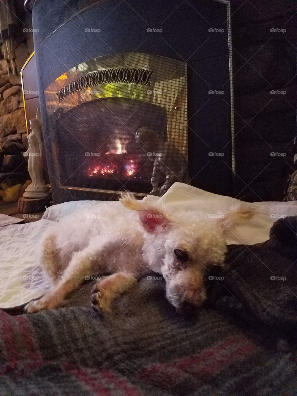 Dog sleeping in bed in front of burning fireplace.🐾