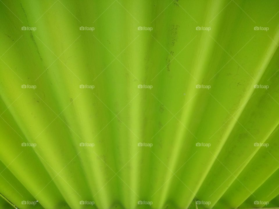Texture shown on green leaf
