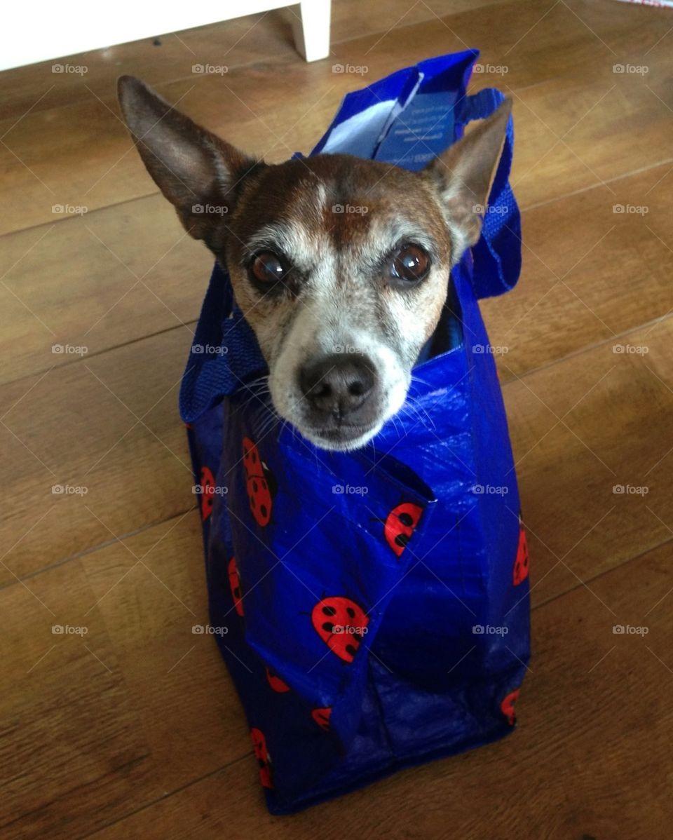 Doggy bag!