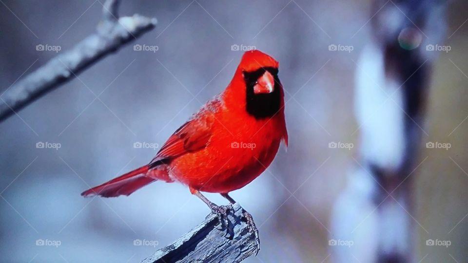 No Person, Bird, Wildlife, Nature, Outdoors