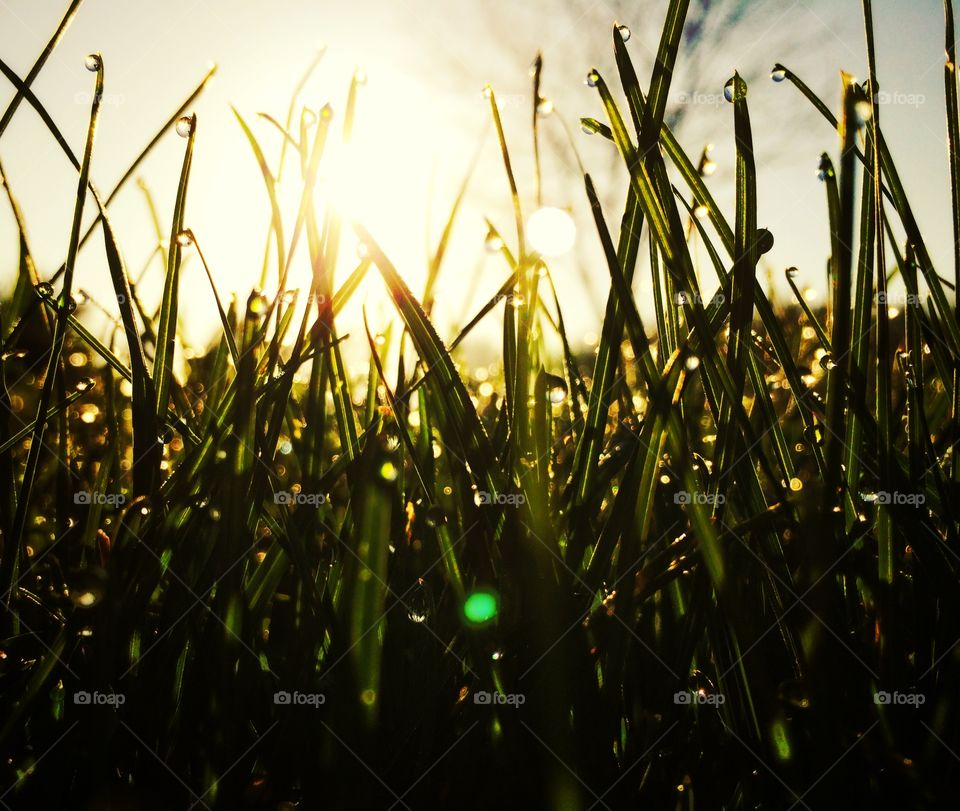 Sunrise. Wet grass at sunrise
