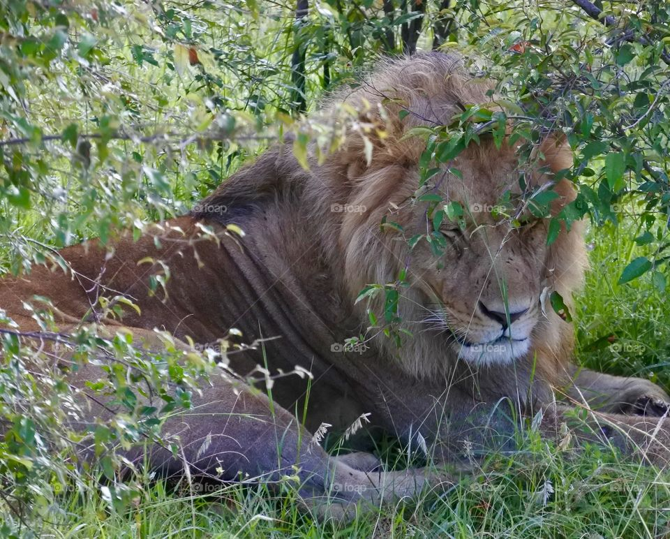 High angle view of lion in forest