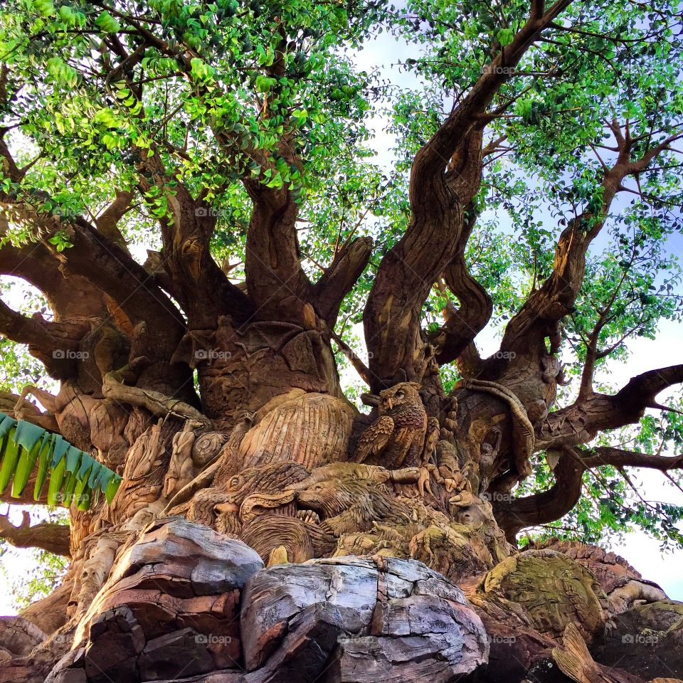 Low angle view of huge tree