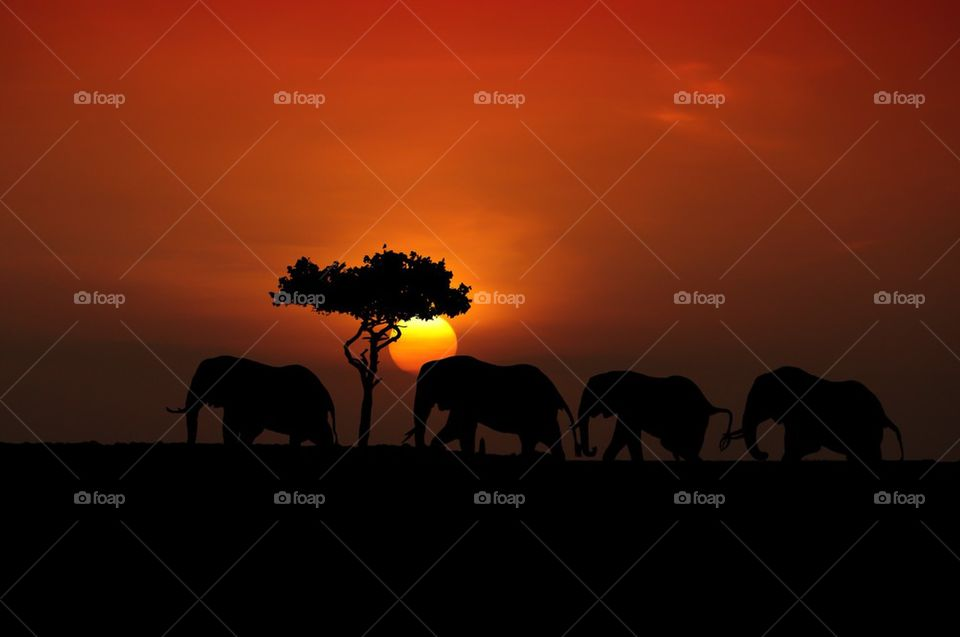 Silhouette of elephants at dusk