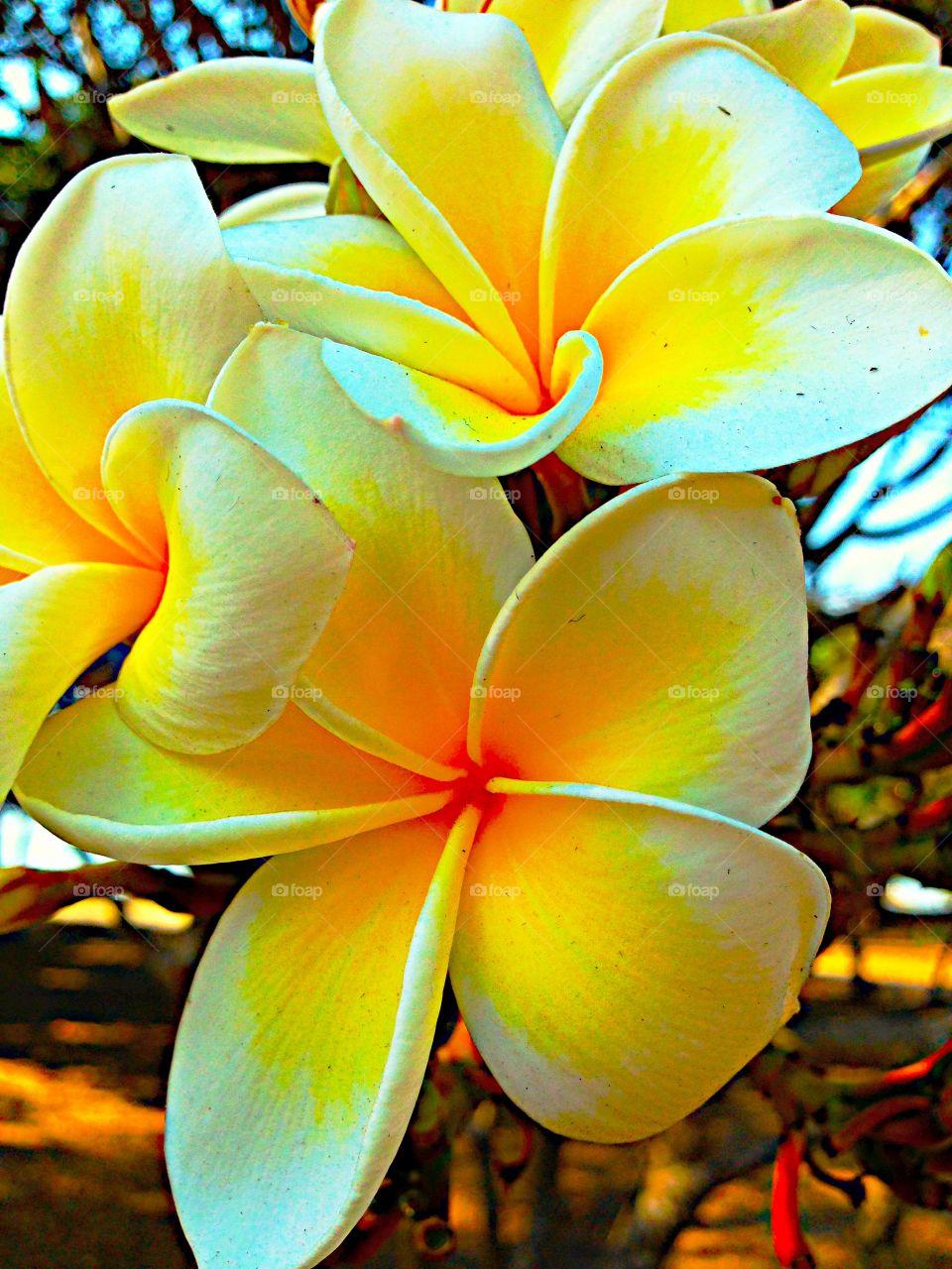 Yellow . Yellow beautiful flower!