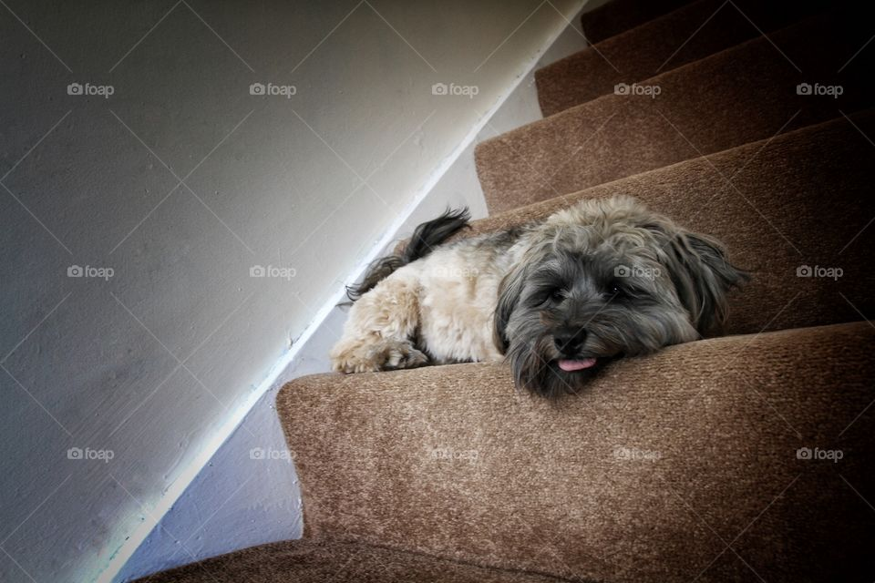 An abandoned dog looking sad on some stairs.