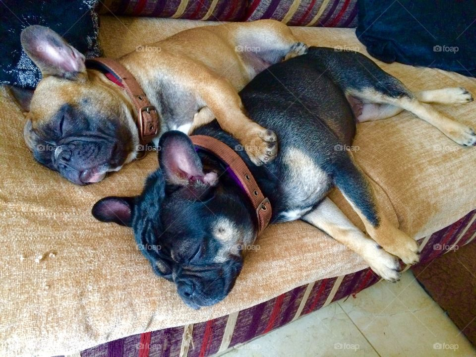 Puppy spooning. Walked in to see my two puppies spooning. They sleep together all the time. Best friends