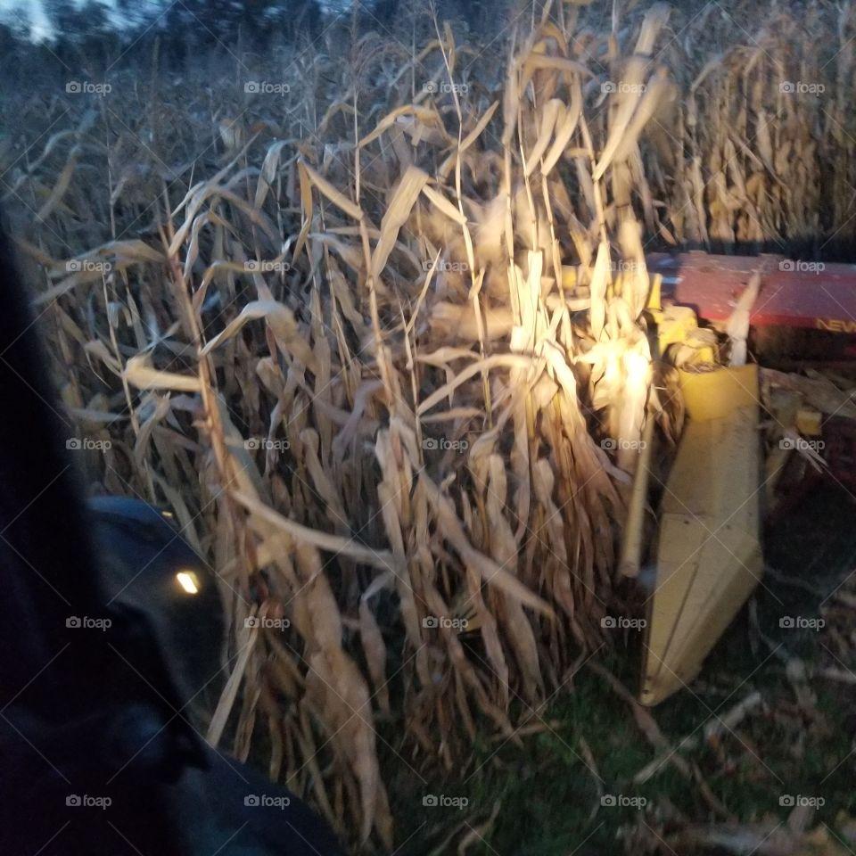 Harvesting corn.  Chopping corn silage on the farm.