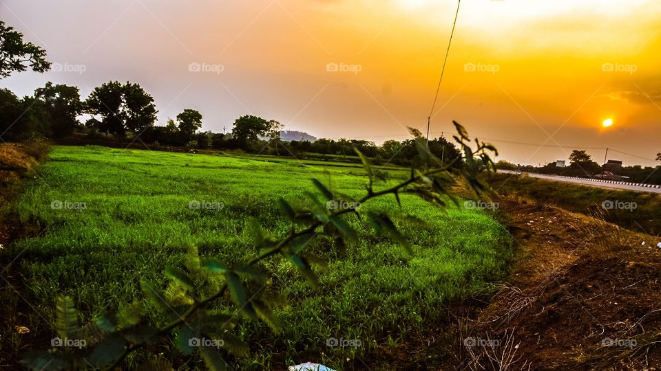 Agriculture field in the countryside during sunset