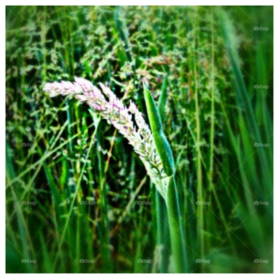 Blooming Green Grass