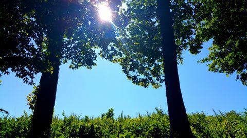 Sunlit Trees. Sunny Day