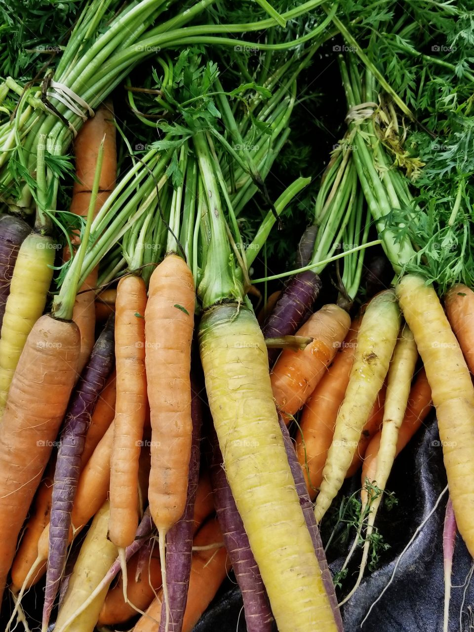 Fresh Carrot's from the local Market