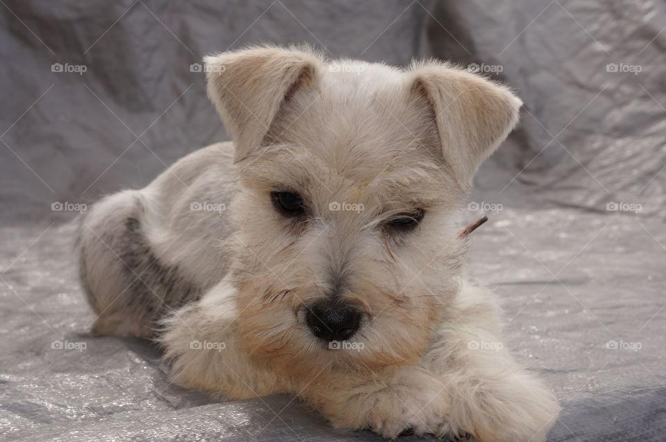 My pet Bella 3