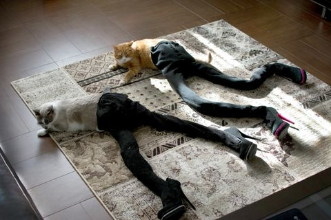 two cats with long long legs