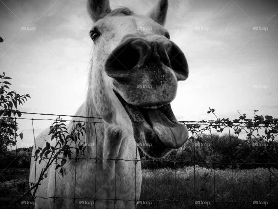 Funny Grey Horse